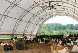 Cattle Building with Giant Fans inside photo