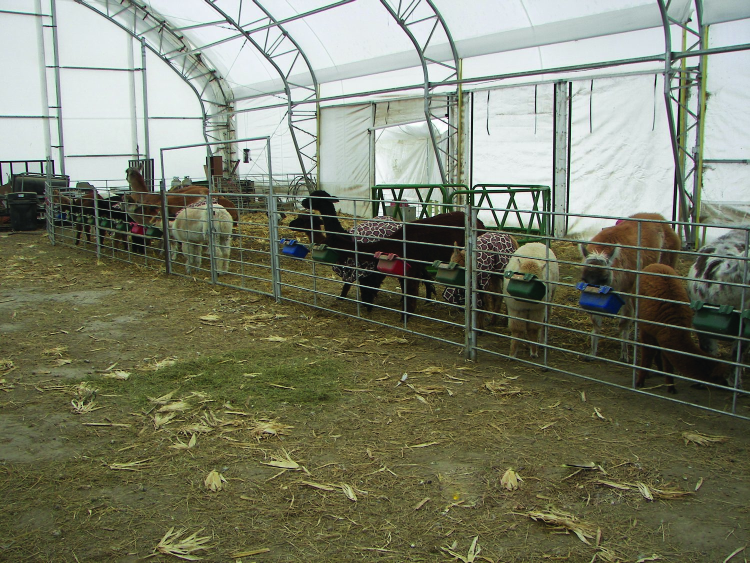 a report on alpaca farming Alpacas - magical farms, america's largest and most varied huacaya alpaca herd mywot reports its overall reputation as good and google safe browsing reports.