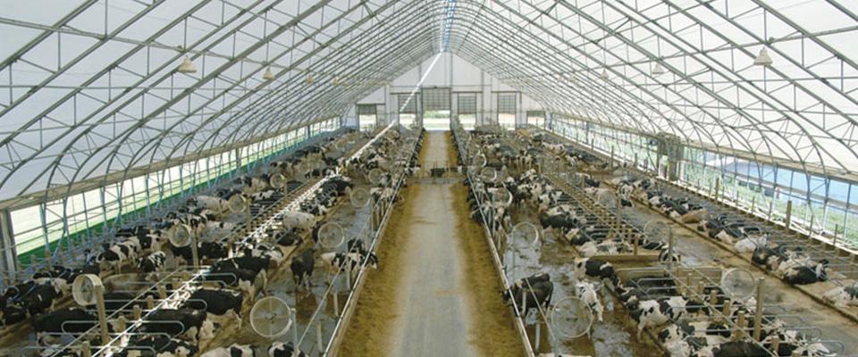 Dairy buildings