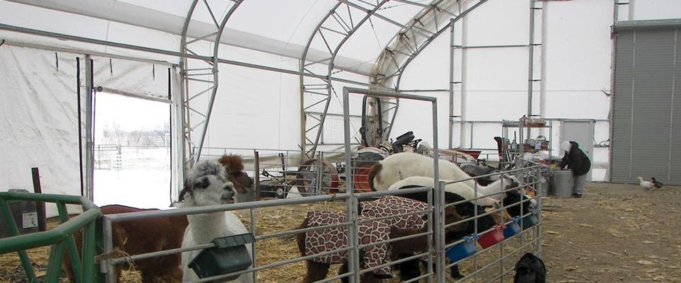 Custom livestock building