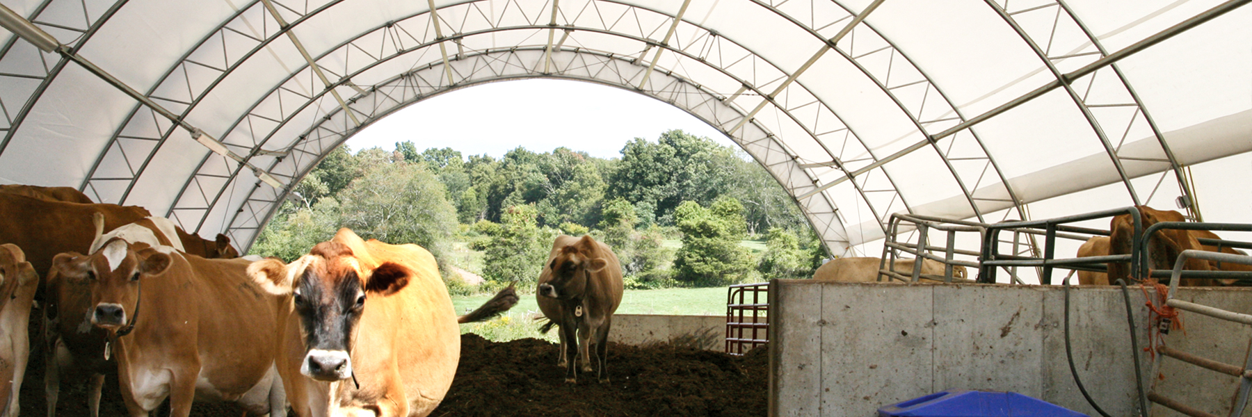 Cattle under a round HD Building in CT